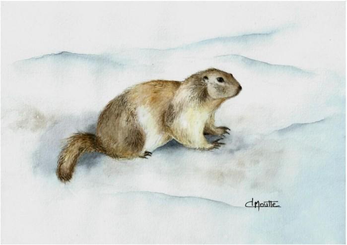 Moutte-Marmotte-du-Champsaur.JPG