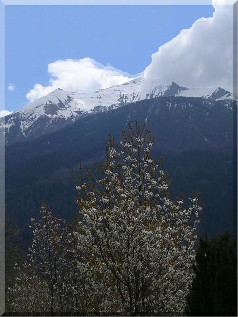Saint-Nicolas-arbre-en-fleur.jpg