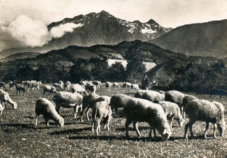 Troupeau-de-moutons.jpg