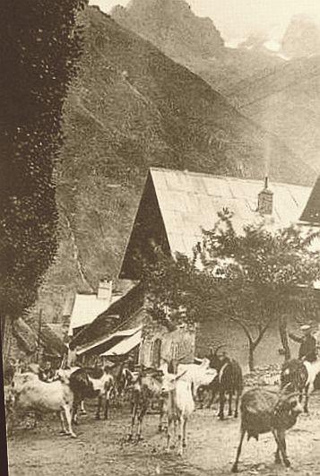 Valgaudemar-depart-des-chevres-pour--la-montagne.jpg