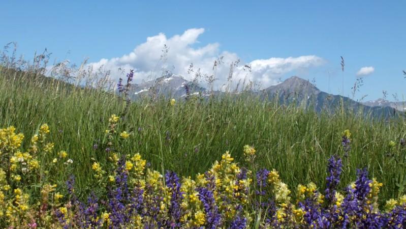 fleurs-montagne.jpg