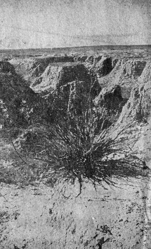 rf-1016.jpg